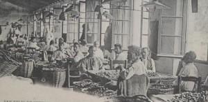 Trabajadores en una fábrica catalana de tapones de corcho